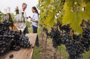 New Zealands Wine Trail