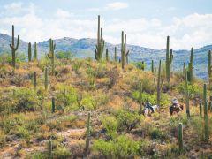 Explore the Real Arizona