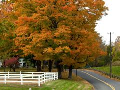 Fall in New England