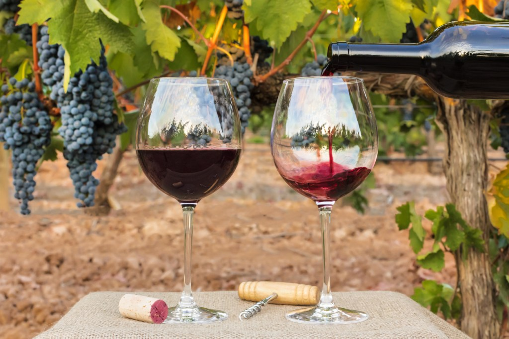 Red wine poured into glasses at vineyard on harvest