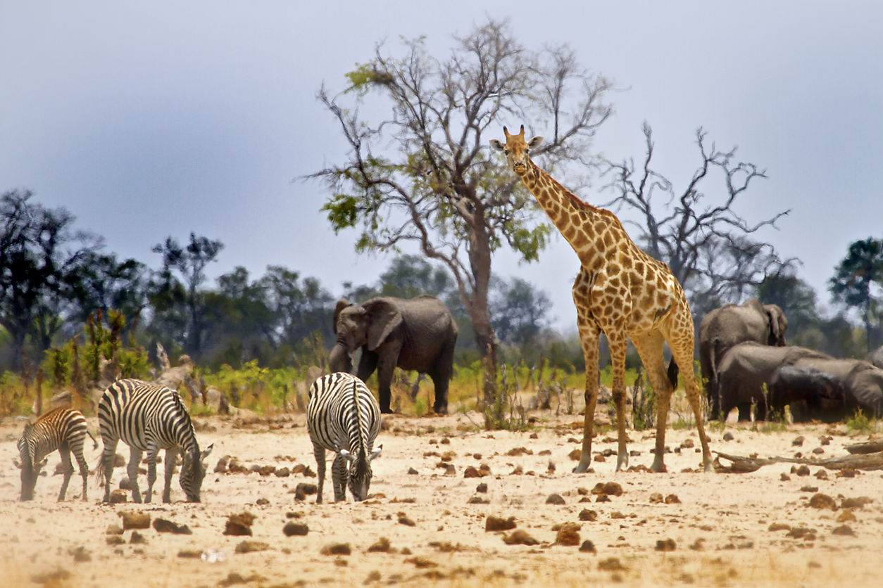 View from Camp in Hwange National Park