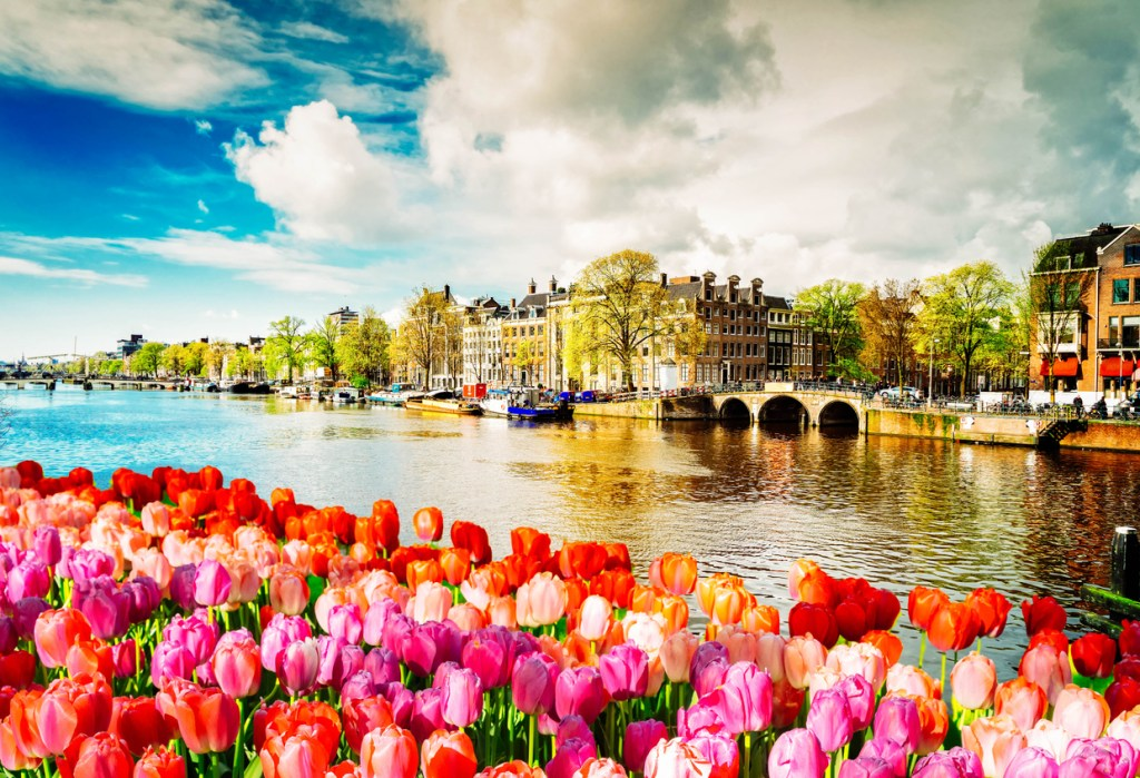 Embankment of Amstel canal with spring tulips in Amsterdam
