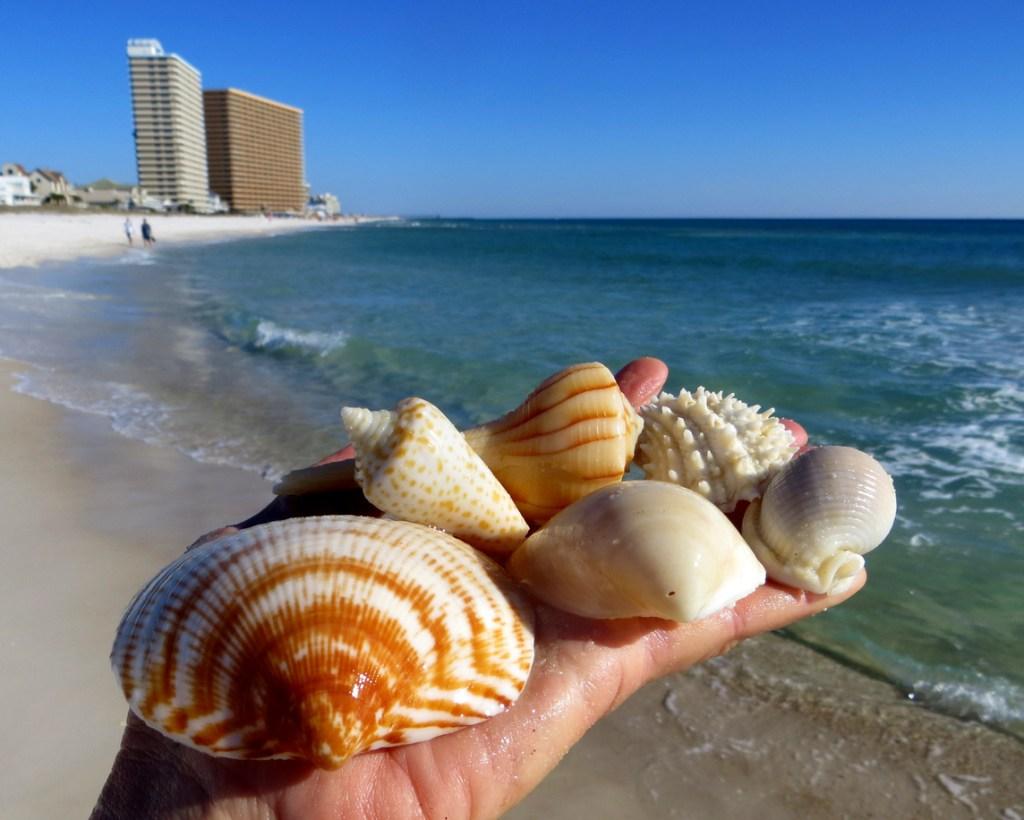 Collecting Shells on the Panama Beach, Florida