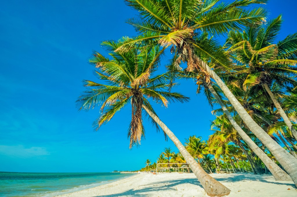 Tropical Beach with Palms. Beautiful Beach, Palms and the Ocean Scenery. Tropical Destination Theme.