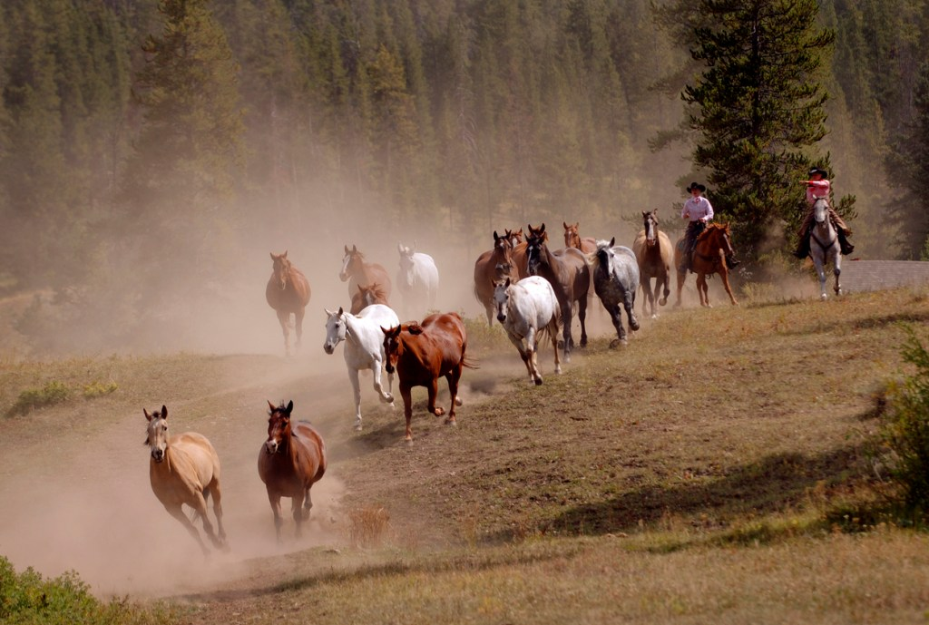 Ranching Vacations in Montana