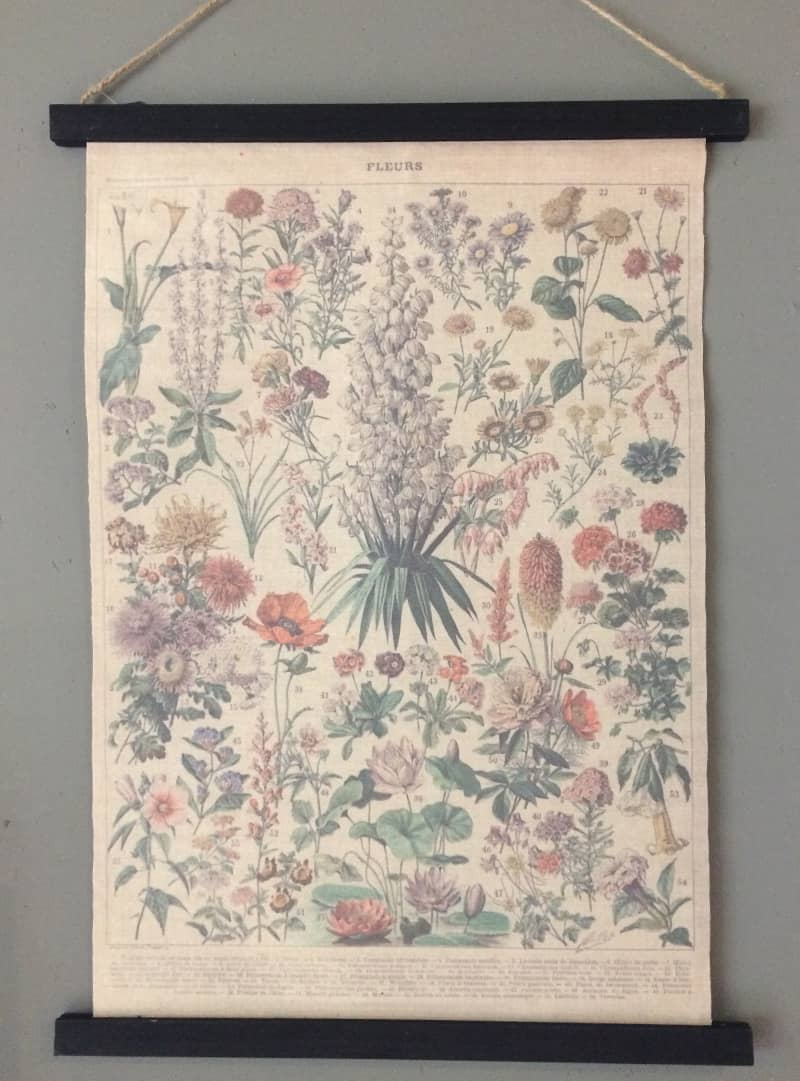 Botanische schoolplaat  Purewood