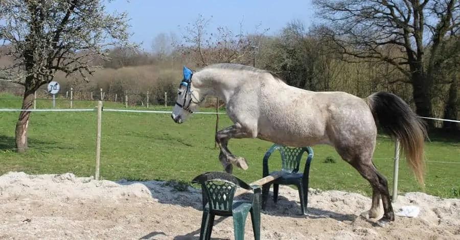 Assicurazione cavallo
