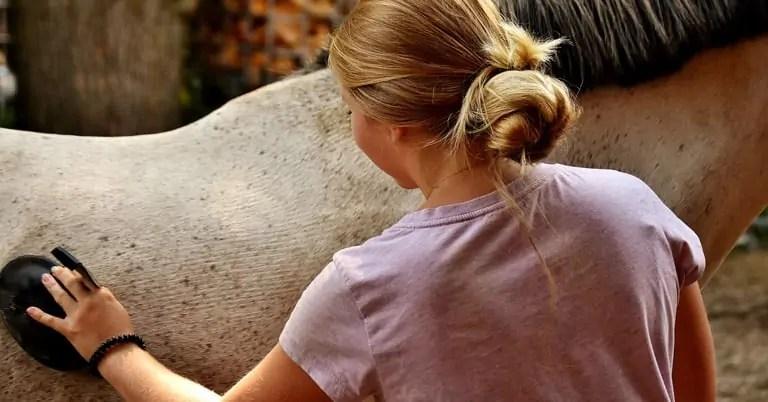 Bauletto equitazione per la cura del cavallo
