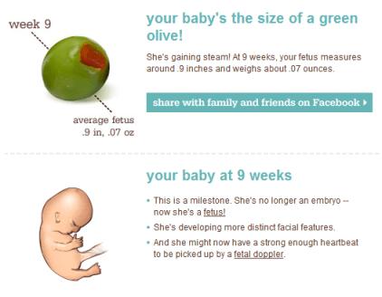 9 weeks fetus - pregnant