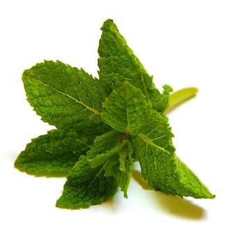 mint-herb-benefits