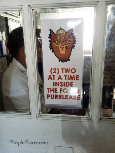 Miao Cat Cafe Entrance Fee