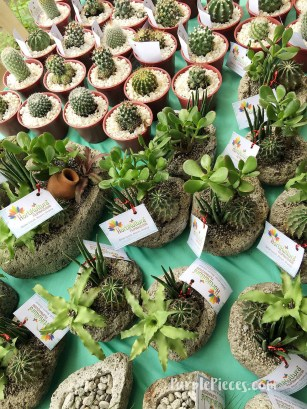 Cactus - Hortikultura 2018