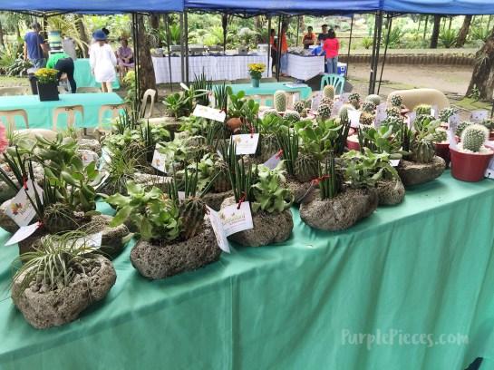 Hortikultura 2018 Cacti Succulents