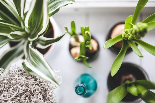 simplify your life and home with plants