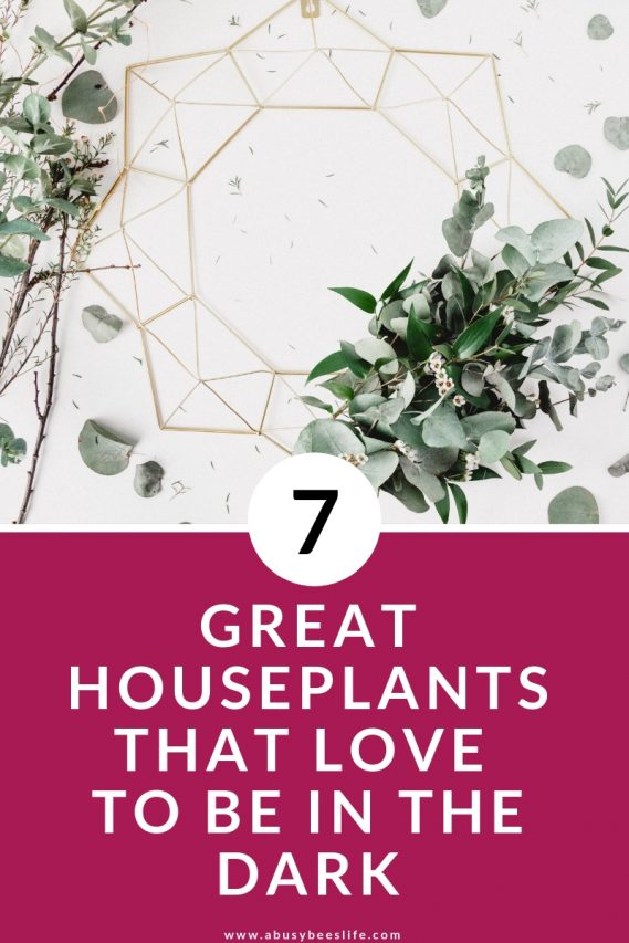 Have you experienced the frustration of having indoor plants die on you too often?  I'm sure you'll love to hear about these uncommon and low-maintenance houseplants that love to be in the dark. Click through to find out which ones they are. #plants #home #minimalism #indoorplants #hangingplants #DIY #potten #decor #photography