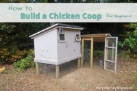 How to Build a Chicken Coop for Beginners - Purposefully ...