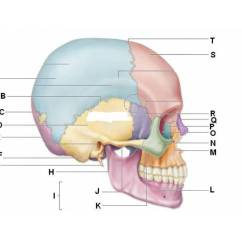 Skull Diagram Unlabeled Astra G Stereo Wiring Axial Skeleton- Bones (1) Id