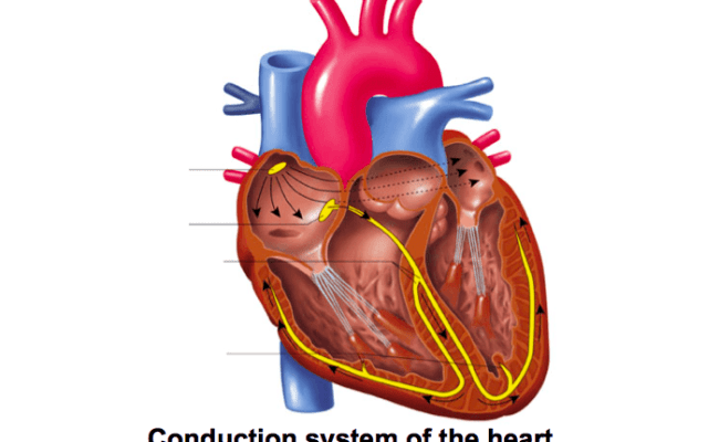 Game Statistics Conduction System Of The Heart