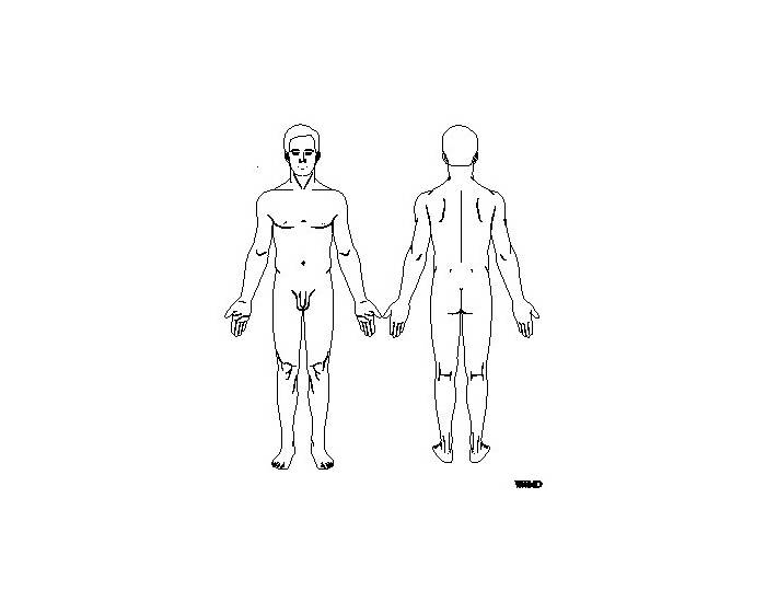 Anterior and Posterior Body Landmarks
