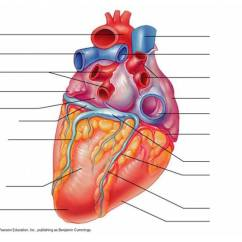 Heart Diagram Quiz Games 2004 Ford Expedition Fuse Box Gross Anatomy Of The Labeling - Purposegames