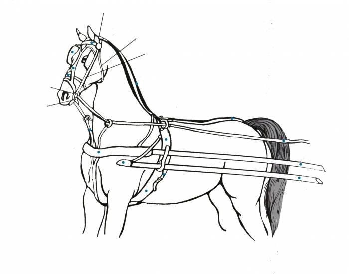 Basic Parts of the Horse Harness