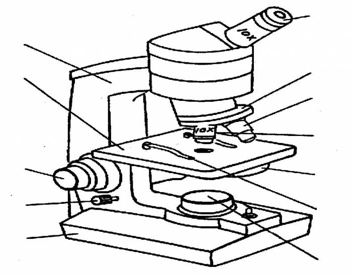 Microscope Labeling