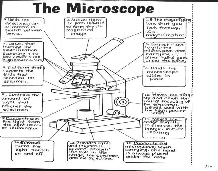 Label the Microscope Part