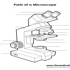 Binocular Compound Microscope Diagram Control Wiring Of 3 Phase Motor Light Purposegames