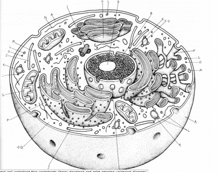Animal Cell Label Organelles