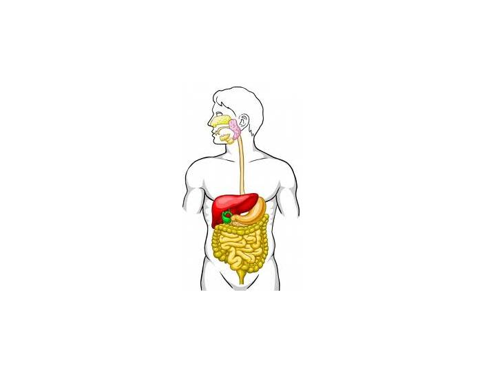 label digestive system