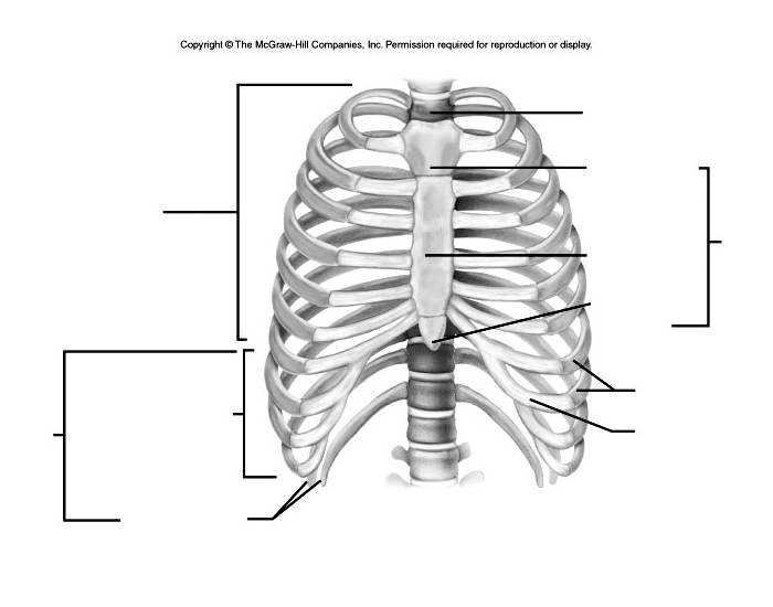Identify the bones of the Thoracic Cage