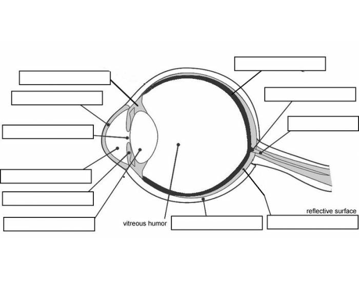 label eye diagram quiz