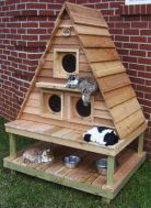 3 entry cat house