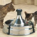 cats drinking together