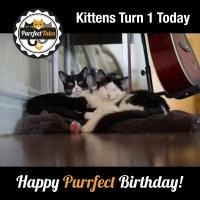 Happy Purrfect Birthday!