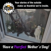 Have A Purrfect Mothers Day!