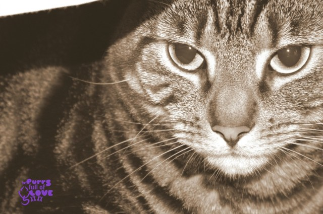 Sepia Saturday Cat Photo