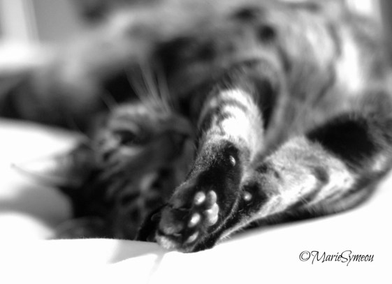 cat stretch in black and white