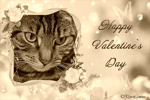 Valentine's Day vintage cat