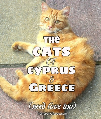 the cats of cyprus and greece