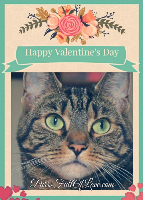 Caturday Art Valentine's Day Instant