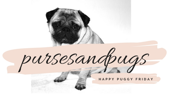pursesandpugs, pug, pugdog, pugs, puggy, happy friday, weekend, weekend mode, happy puggy friday, happy weekend, pug lover, pugs