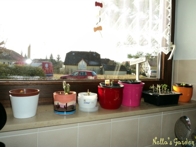Aneka pot tanaman di jendela