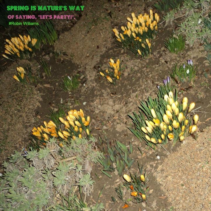 Bunga Krokus Kuning Saat Musim Semi