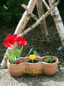 Bunga Tulip di Tamanku