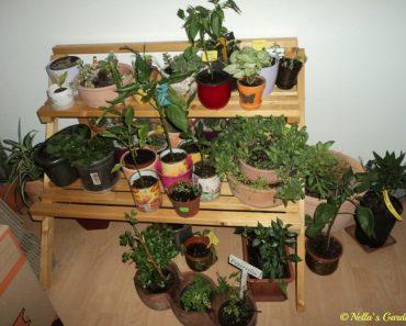 Kebun Dalam Rumah hehehe