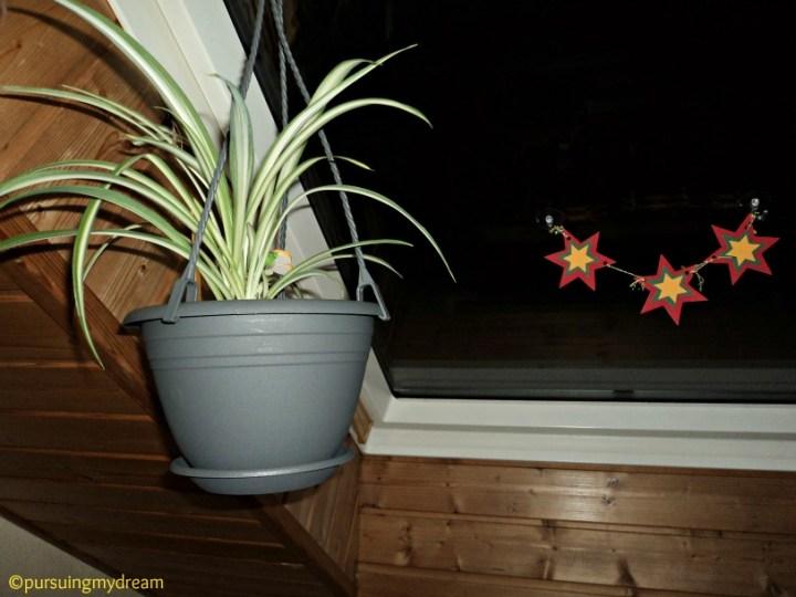 Spider plant Cantik kalau di gantung seperti ini
