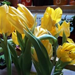 tulip kuning