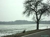 Pemandangan Perkebunan Masih Banyak di Tutupi Salju. 26.02.203