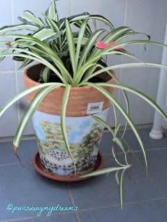 Pot Hasil Napkin technique. Kombinasi Tanaman Spider plant dan Dracaena. Pot Tanaman Ini saya Taruh di pojokan kamar mandi